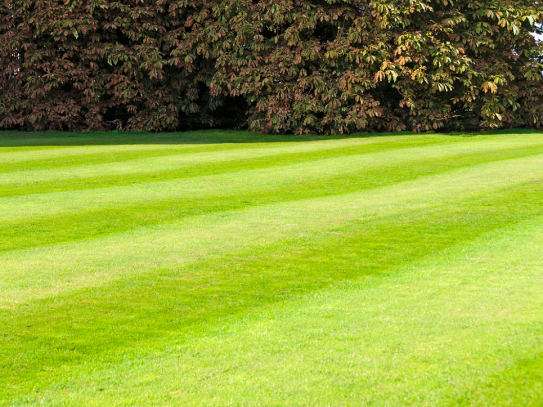 Make lawn maintenance a top priority